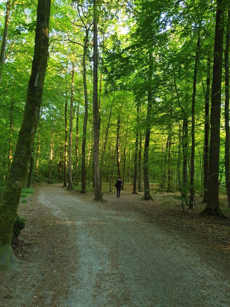 Waldspaziergang im schlosspark rastede