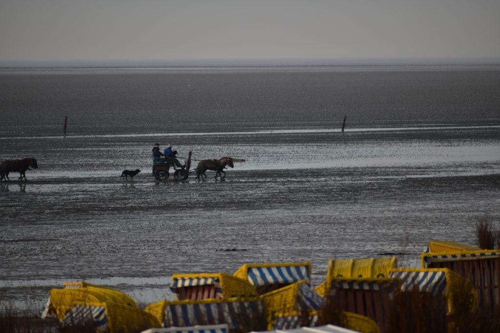 mit Pferdekutsche von Neuwerk nach Cuxhaven