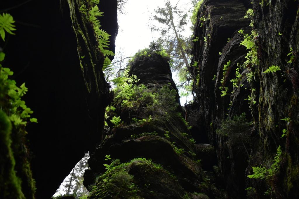 Moosige Felsen Elbsandsteingebirge