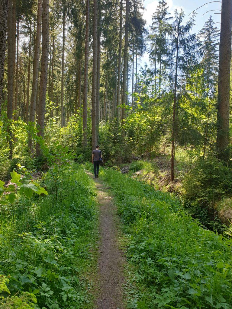 Wilder Wald im wilden erzgebirge