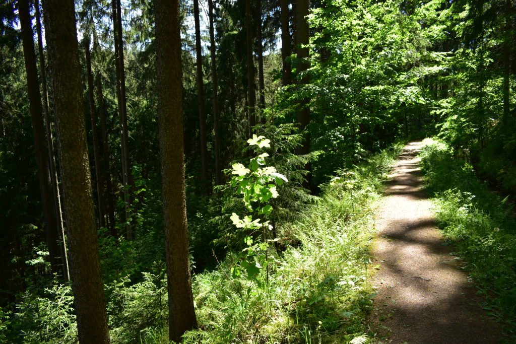 Lichtung wildes erzgebirge